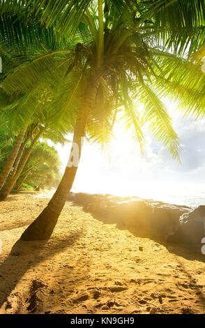 Bright sun over palm trees and ocean. - Stock Photo