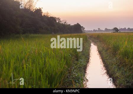 Stream running through rice fields in Chitwan, Nepal seen at dusk. - Stock Photo
