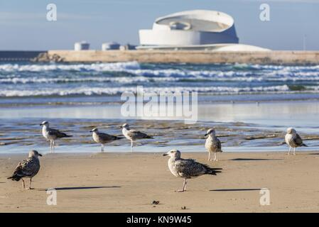 Sea gulls on a beach of Nevogilde civil parish in Porto city, Portugal. Port of Leixoes new Cruise Terminal building - Stock Photo