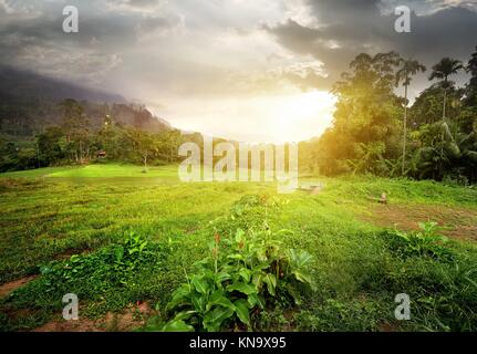 Field in jungles of Sri Lanka at cloudy sunset. - Stock Photo
