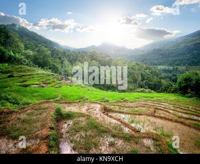 Green rice fields in mountains of Sri Lanka. - Stock Photo