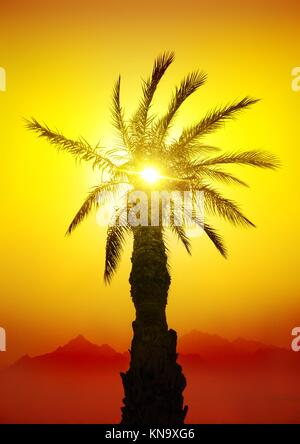 Palm in desert mountains at the sunset. - Stock Photo