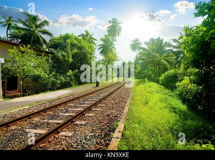 Railroad through green palm forest in Sri Lanka. - Stock Photo