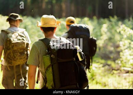 Three male hikers walk through the forest, seen from behind. - Stock Photo