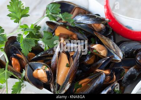 Closeup of bowl with mussels saute decorated with fresh parsley and red chili pepper. - Stock Photo