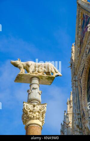 She-wolf with Romulus and Remus in front of the Duomo of Siena, Cattedrale di Santa Maria Assunta, Siena, Province - Stock Photo