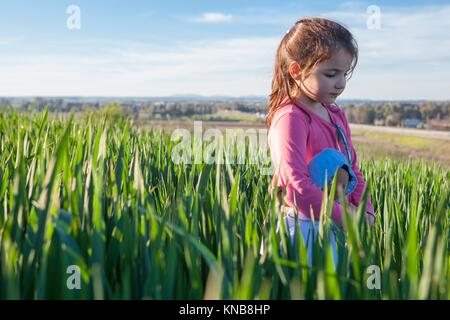Little girl and her doll walking through green cereal field at sunset, Spain. - Stock Photo