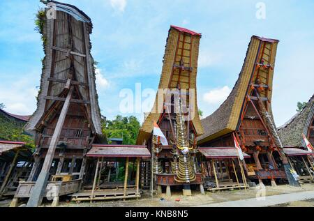 Tongkonan traditional houses in Tana Toraja, Sulawesi, Indonesia. - Stock Photo