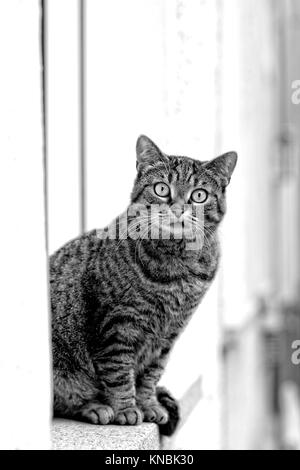 Funny stray cat sit on a windowsill and look to the camera black and white portrait - Stock Photo