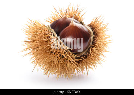 Fresh sweet chestnuts in the shell isolated on white - Stock Photo