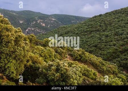 encinar en la cuenca del rio Zumeta, sierra de las Huebras,Parque Natural de las Sierras de Cazorla, Segura y Las - Stock Photo