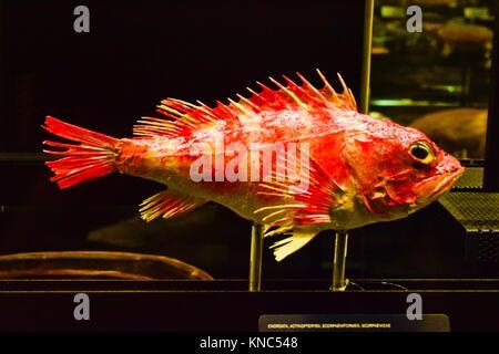 Fish. Museu de les Ciències Naturals de Barcelona, Natural Science Museum of Barcelona, Museu Blau. Forum Building, - Stock Photo