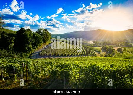 Spectacular sunset over the green vineyards of Langa Piedmont, the blue sky is full of suggestive clouds. - Stock Photo