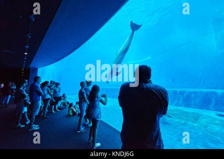 People visiting the dolphins tank at the Aquarium of Genoa. Italy. - Stock Photo