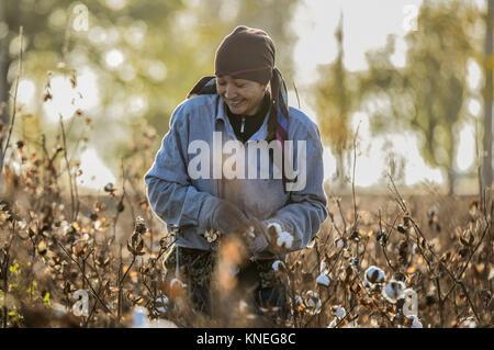 Woman picking cotton in the Khiva countryside, Xorazm Region, Uzbekistan, October 28, 2017    Credit © Jacopo Casaro/Sintesi/Alamy - Stock Photo