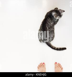 Overhead view of a woman's feet next to an American shorthair cat