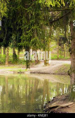Forest lake and spruce trees around it. Reflections of trees in water - Stock Photo