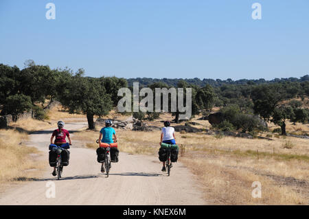 Three cyclists on the Via de la Plata camino route in Spain. They are cycling on a track through dehesa, dry scrubby - Stock Photo