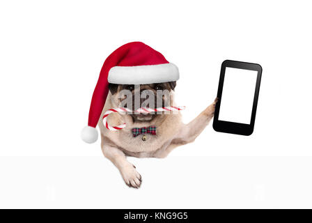 cute Christmas pug dog with santa hat and candy cane, holding up mobile smart phone, paw leaning on white banner, - Stock Photo