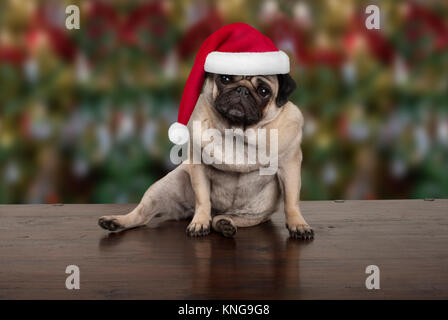 funny Christmas pug puppy dog sitting down on wooden ground, wearing santa claus hat, seasonal background - Stock Photo