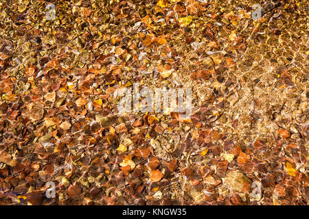 background image of clear water with ripple effect and fallen colorful leaves on a stony bed - Stock Photo