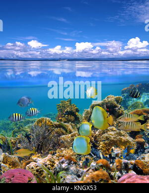 Over and under the sea with cloudy blue sky reflected on water surface and underwater a colorful coral reef with - Stock Photo