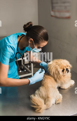 Young vet doctor giving vaccination injection to pet dog - Stock Photo