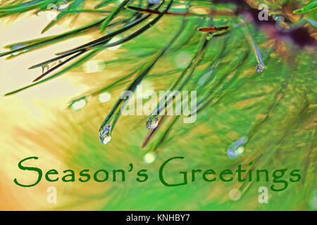 Design for a Christmas greeting with spruce needles and dew drops. - Stock Photo