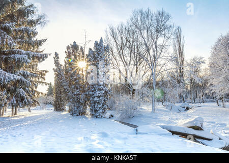 First snow in the city park with trees trees under fresh snow at sunrise - Stock Photo