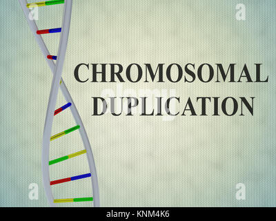 3D illustration of 'CHROMOSOMAL DUPLICATION' script with DNA double helix , isolated on pale blue background. - Stock Photo
