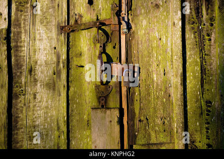 old weathered wooden garden shed door with padlock, norfolk, england - Stock Photo