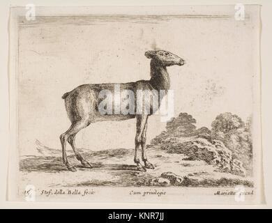 Plate 15: doe, from 'Various animals' (Diversi animali). Series/Portfolio: 'Various animals' (Diversi animali); - Stock Photo