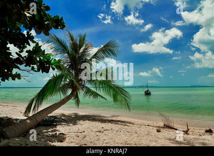Palm on the beach, Ko Samui - Thailand - Stock Photo