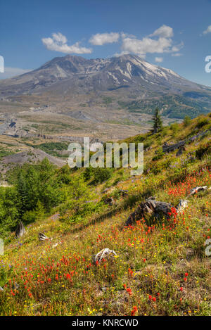 Mt St Helens with Wild Flowers, Mt St Helens National Volcanic Monument, Washington, USA - Stock Photo