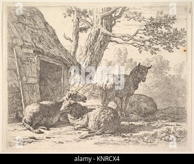 Four sheep, one sheep stands among three others lying on the ground next to a shed with thatched roof and open door. - Stock Photo