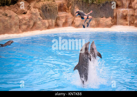 Two dolphins pushing a trainer into the air at Loro Parque - Stock Photo