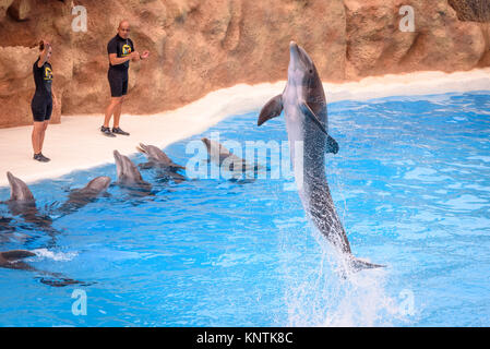 A dolphin jumping at Loro Parque