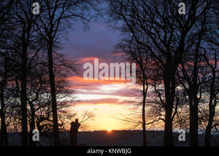 Tree silhouettes at sunset in late autumn. Broadway, Cotswolds, Worcestershire, England - Stock Photo