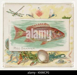 Red Snapper, from Fish from American Waters series (N39) for Allen & Ginter Cigarettes. Publisher: Issued by Allen - Stock Photo