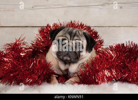 cute Christmas pug puppy dog, lying down in red tinsel on sheepskin, with vintage wooden background - Stock Photo