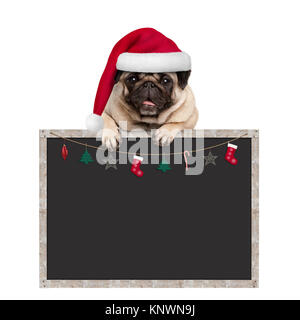 cute pug puppy dog wearing santa hat hanging with paws on blank blackboard sign with Christmas decoration, isolated - Stock Photo