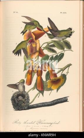 The Birds of America from Drawings Made in the United States. Designer: After John James Audubon (American (born - Stock Photo