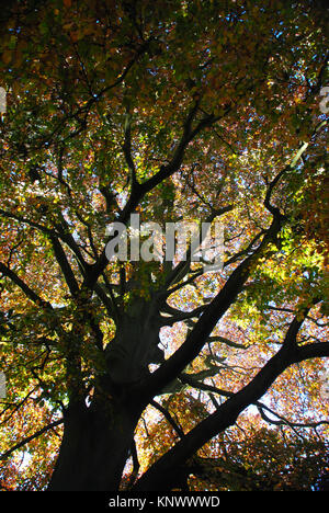 The Beauty of Trees, Newstead Abbey Park, Nottinghamshire - Stock Photo