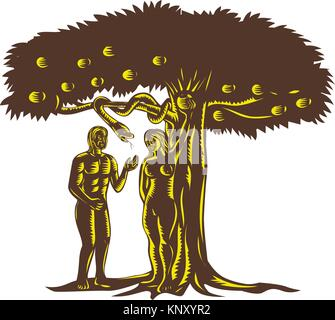 Retro woodcut style illustration depicting the fall of man showing Adam with Eve in garden of Eden picking the apple - Stock Photo
