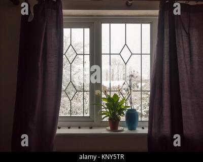 inside curtains window house room windowsill plant blue vase bedroom student; essex; england; uk - Stock Photo