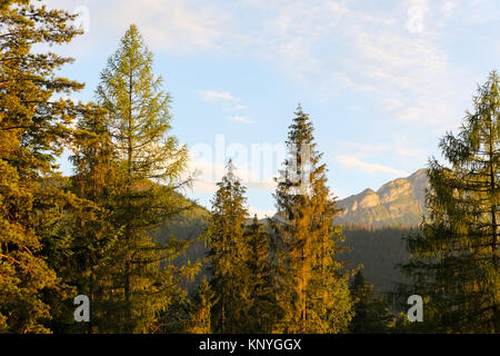 The view of the Tatra landscape with its magnificent trees and mountains is seen from Zakopane. - Stock Photo