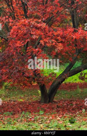 Winkworth Arboretum. National Trust. Godalming. Surrey. England. - Stock Photo