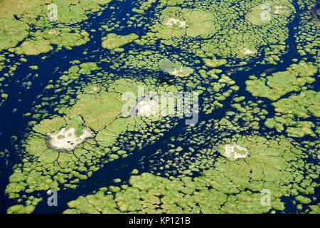 Aerial view of the Okavango delta with channels, lagoons, swamps and buffaloes (Syncerus caffer) on an island, Botswana, - Stock Photo