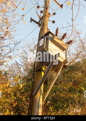 electrical power supply generation metal box wooden post woods; essex; england; uk - Stock Photo