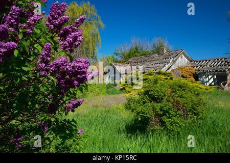 Abandoned homestead, Whitman County, Washington. - Stock Photo